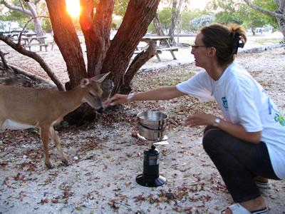 Florida_Keys_deer.jpg