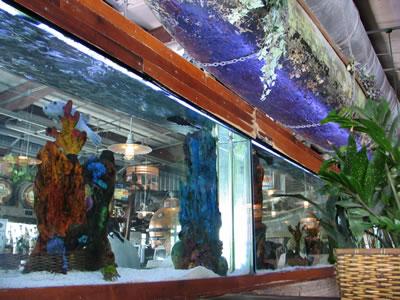 conch_republic_seafood_company_aquarium.jpg