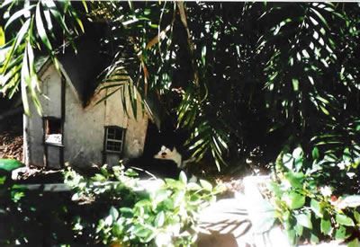 hemingway_house_cat.jpg