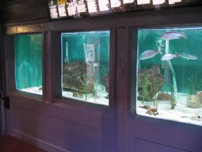 key west aquarium.jpg