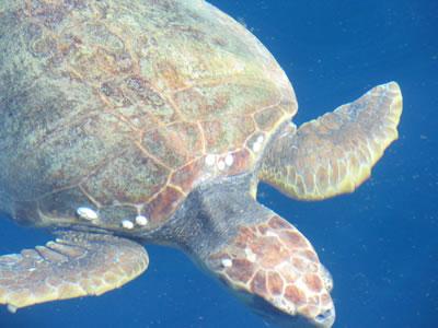 turtle 019.jpg