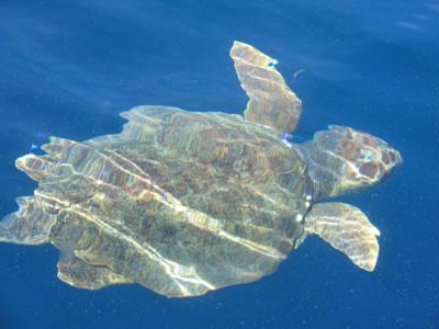 turtle 234.jpg